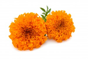 Marigold Extract (Calendula Officinalis Flower Extract)
