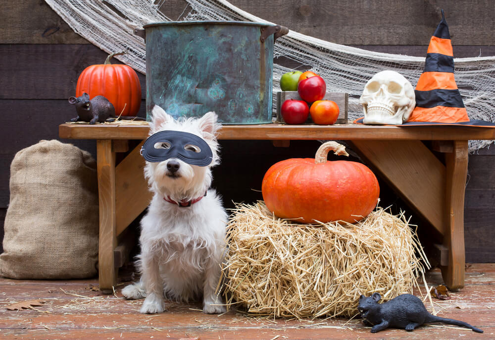 Dog among halloween decoration