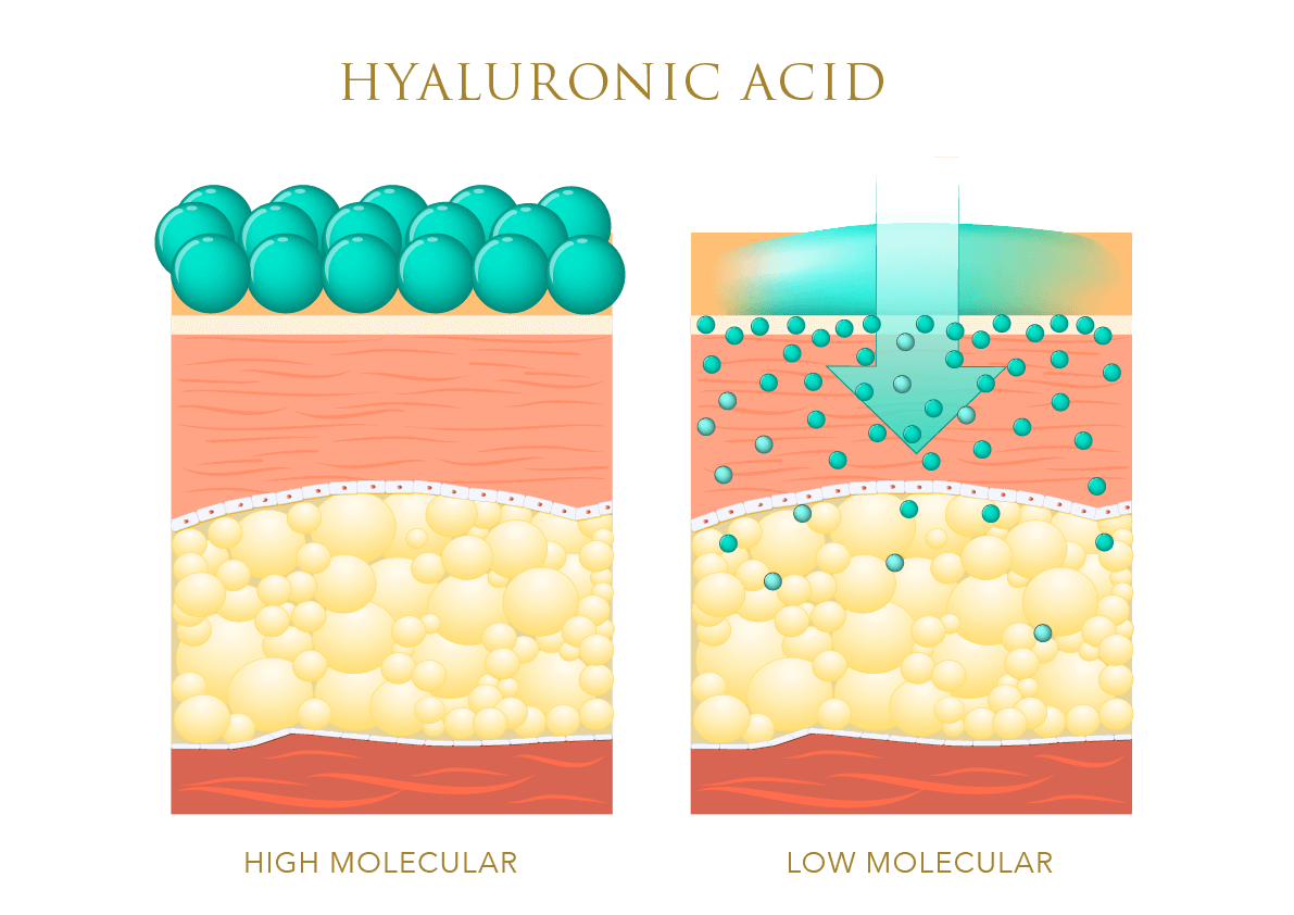 Infographic showing the difference between high and low molecular hyaluronic acid