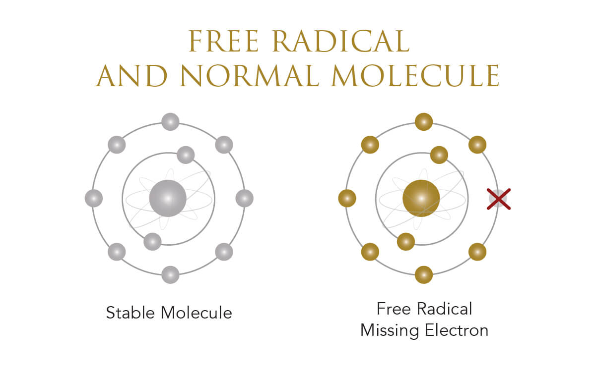 Infographic showing free radical