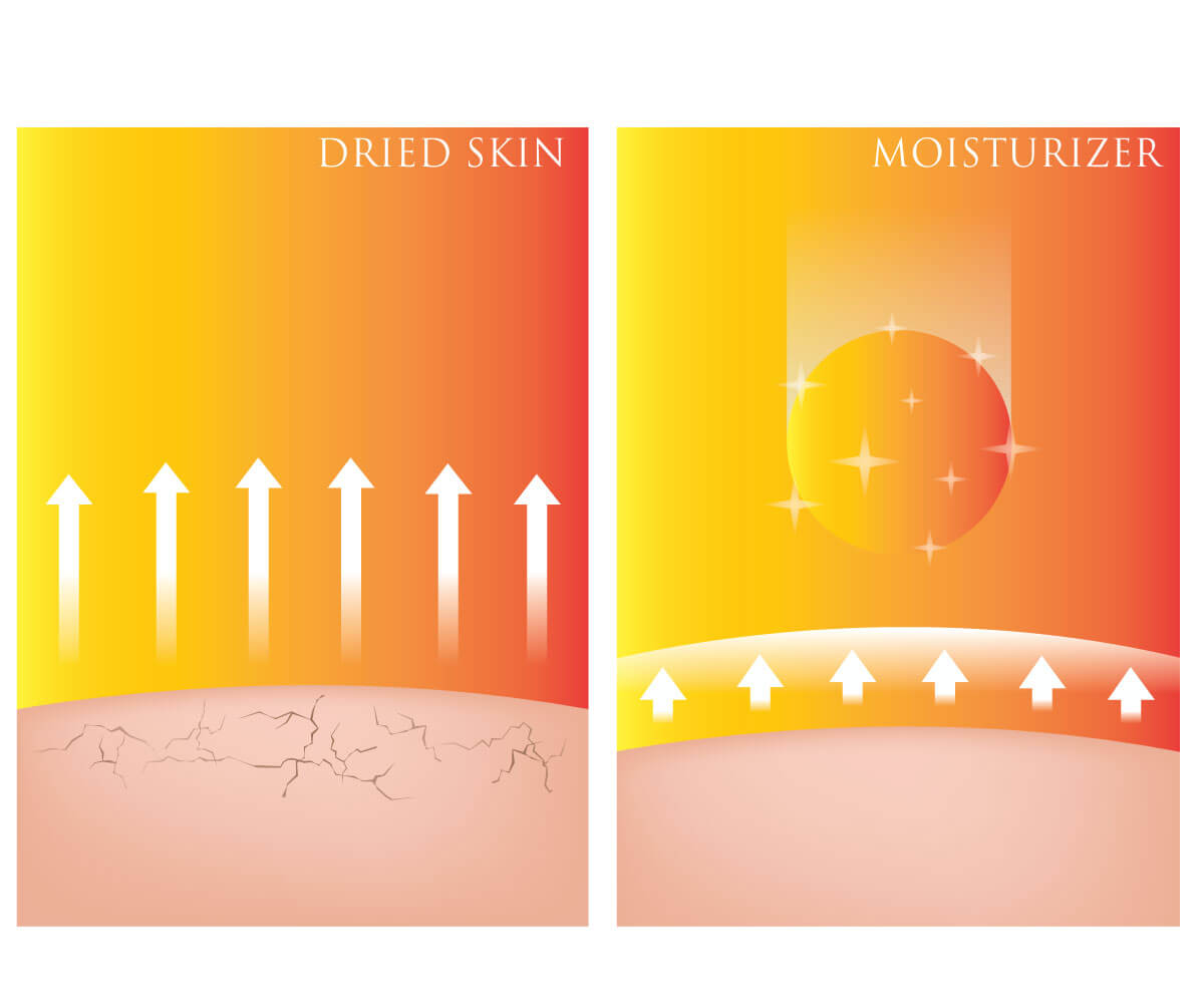Infographic showing the difference between dry skin and moisturized skin