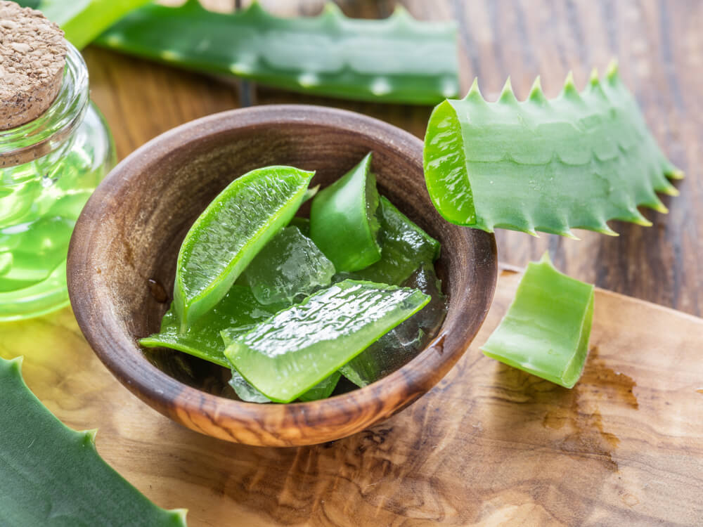 Aloe vera slices in bowl