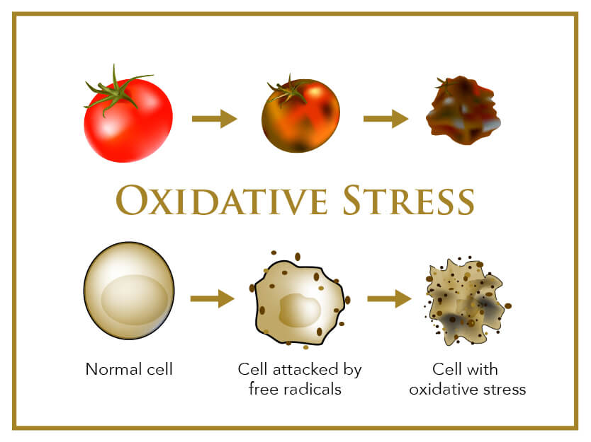 Infographic showing oxidative stress in cells