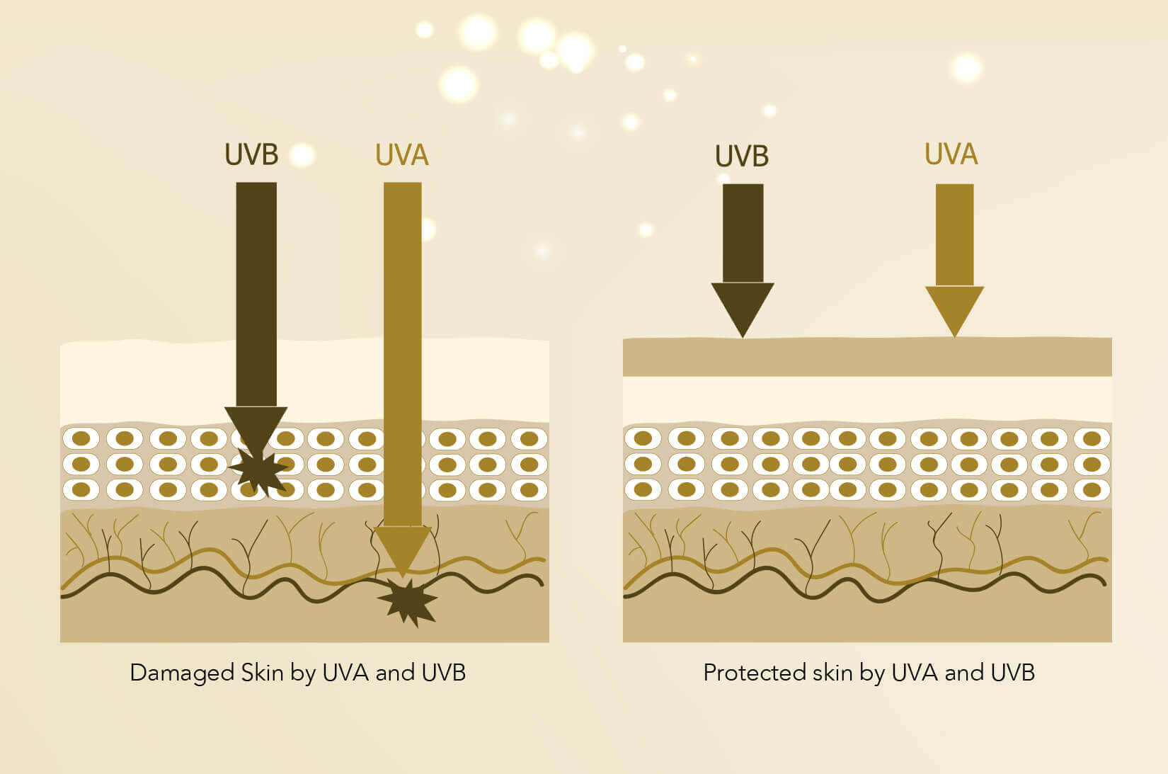 Infographic showing how skin is damaged by UV rays