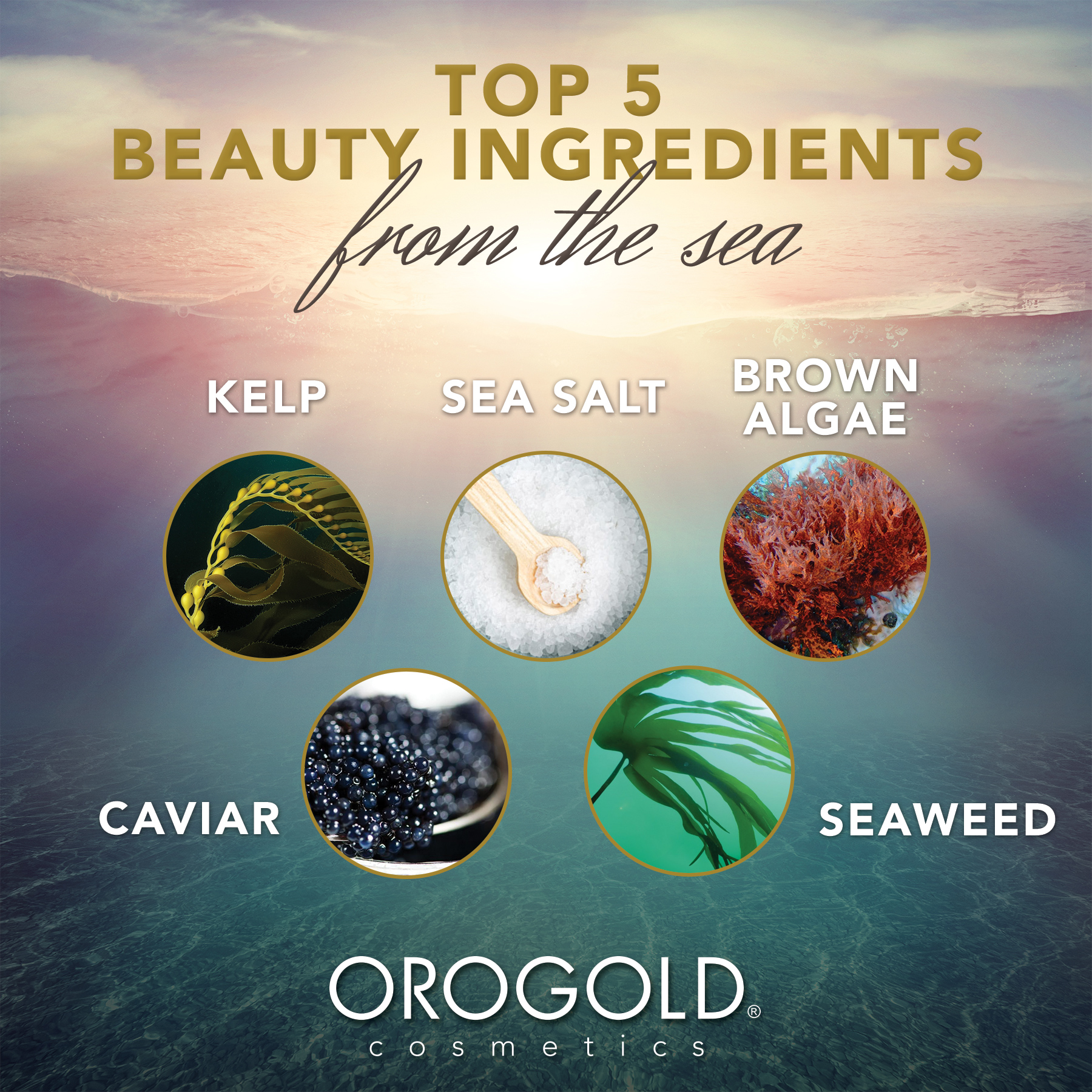 A beautiful image showing the top 5 ingredients from the sea.