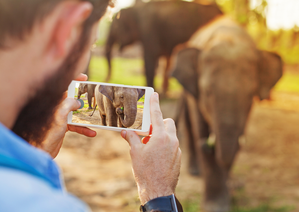 Tourist clicking a photo of an elephant