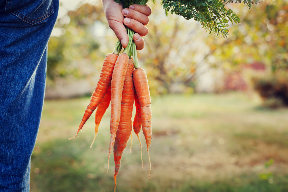 Man with carrots
